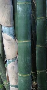 bamboo_hirosi_2