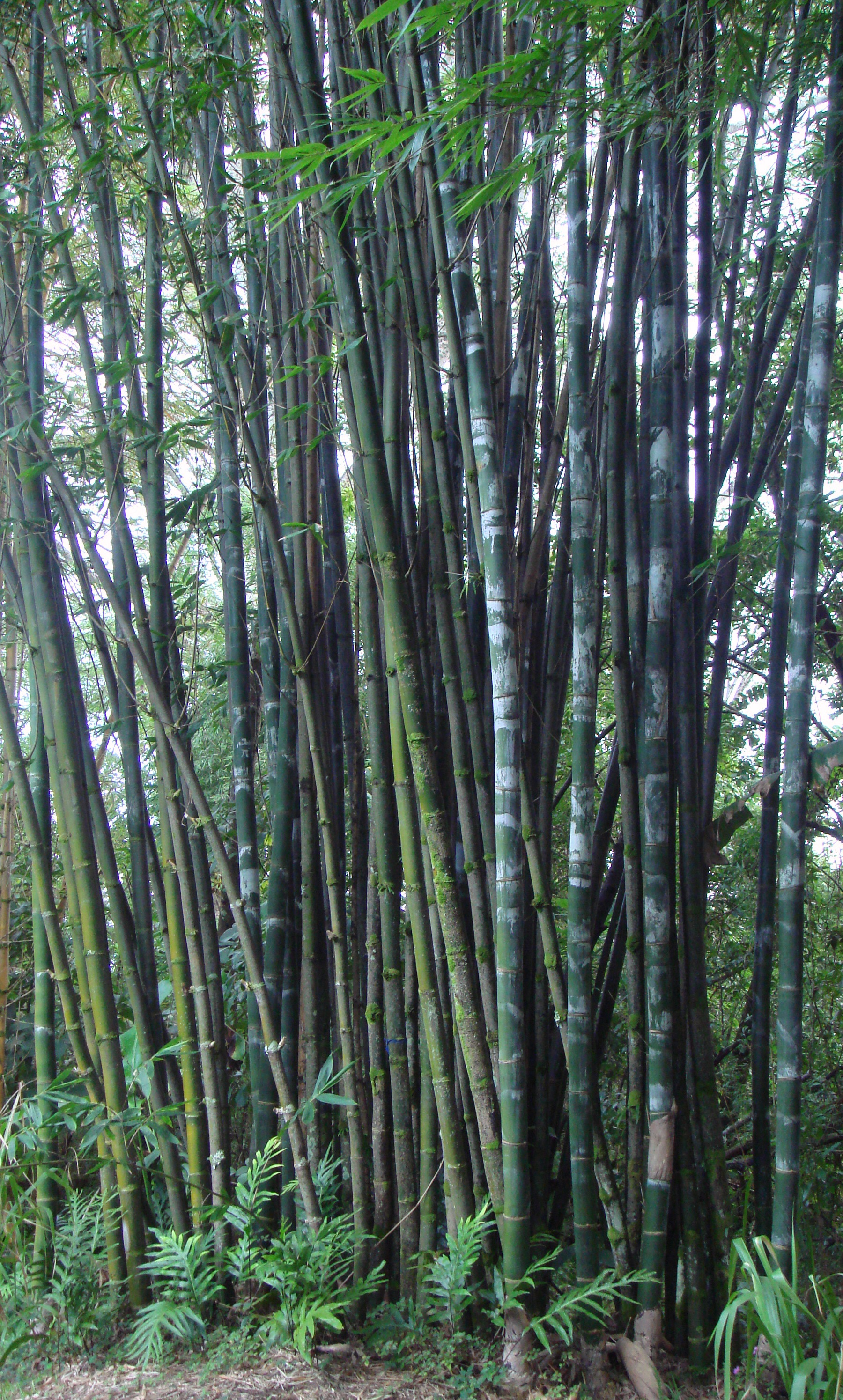 Bamboo Which Shoots Can Be Eaten Take Control Of Your Own Survival And Grow Local