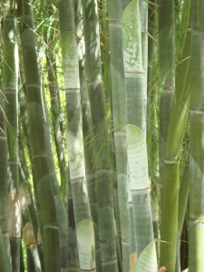 Big_Island_Bamboo_015