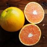 citrus_caracara-150x150